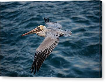 Cliff Cruising Canvas Print by Sonny Marcyan