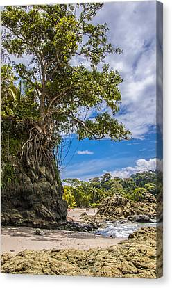 Cliff Diving Tree Canvas Print