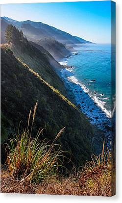 Cliff Grass At Big Sur Canvas Print by Adam Pender