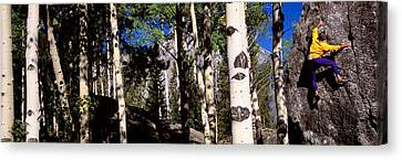 Climber Aspens Grand Teton National Canvas Print by Panoramic Images