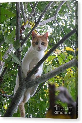 Climbing Kitty Canvas Print by Wendy Coulson