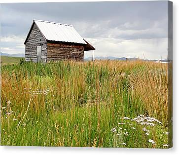 Cline Ranch Outbuilding II Canvas Print by Lanita Williams