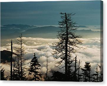 Canvas Print featuring the photograph Clingman's Dome Sea Of Clouds - Smoky Mountains by Mountains to the Sea Photo