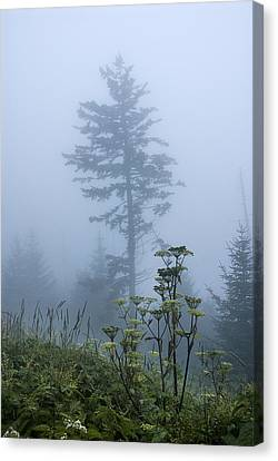 Clingman's Fog II Canvas Print