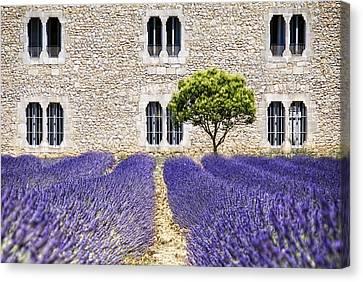 Cloister-lavender Canvas Print by Joachim G Pinkawa