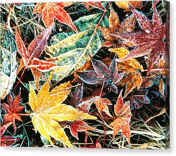Close Up Fallen Maple Leaves Canvas Print by Panoramic Images