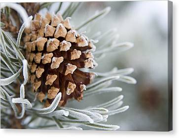 Close-up Image Of Frost-covered Pine Canvas Print by Charles Tribbey