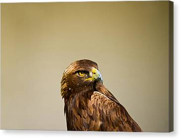 Close-up Of A Golden Eagle Aquila Canvas Print by Panoramic Images