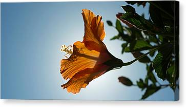 Close-up Of A Hibiscus Flower In Bloom Canvas Print by Panoramic Images