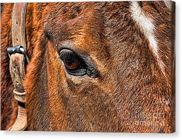 Close Up Of A Horse Eye Canvas Print