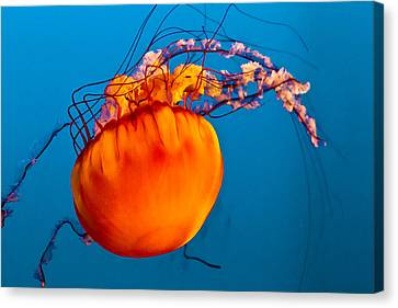 Canvas Print featuring the photograph Close Up Of A Sea Nettle Jellyfis by Eti Reid