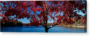 Close-up Of A Tree, Walden Pond Canvas Print by Panoramic Images