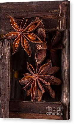 Close-up Of Anise Canvas Print by Natasha Breen