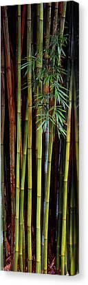 Close-up Of Bamboos, Kanapaha Botanical Canvas Print