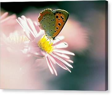Close Up Of Butterfly On Flower Canvas Print by Panoramic Images