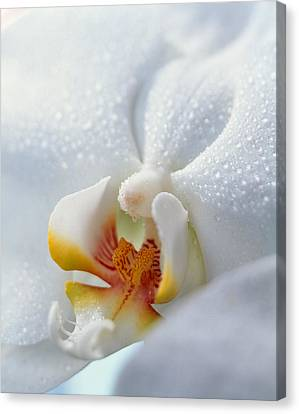 Close Up Of Center Of White Orchid Canvas Print