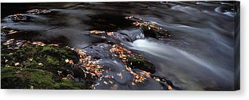 Close-up Of Dart River And Fallen Canvas Print by Panoramic Images