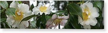 Close-up Of Details Of Camellia Flowers Canvas Print by Panoramic Images