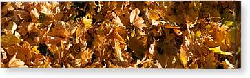 Close-up Of Dry Leaves Canvas Print by Panoramic Images