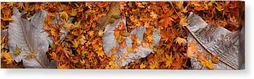 Close-up Of Fallen Maple Leaves Canvas Print by Panoramic Images