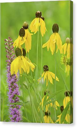 Nature Center Canvas Print - Close-up Of Flowers Blooming by Panoramic Images