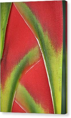 Close-up Of Heliconia, Costa Rica Canvas Print