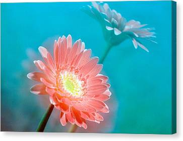 Close Up Of Pink And Lavender Flowers Canvas Print