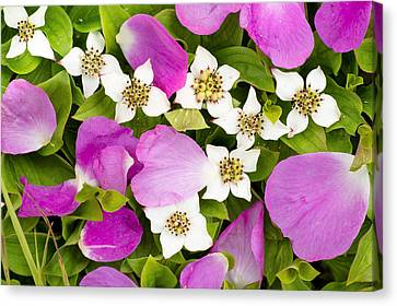 Close Up Of Prickly Rose Petals And Canvas Print by Carl R. Battreall