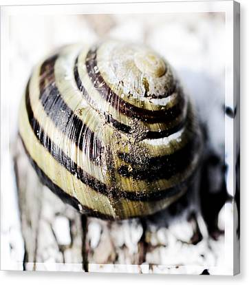 Close Up Of Sea Shell Canvas Print by Tommytechno Sweden