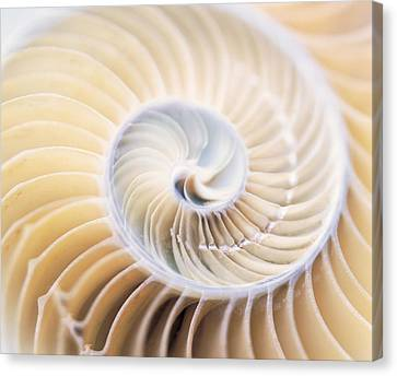 Close Up Of Shell Canvas Print