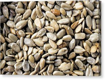Close-up Of Sunflower Seeds Canvas Print by Anonymous