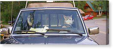 Close-up Of Two Dogs In A Pick-up Canvas Print by Panoramic Images