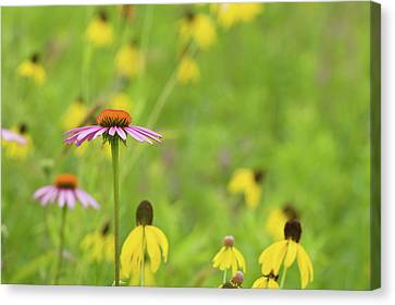 Nature Center Canvas Print - Close-up Of Various Coneflowers by Panoramic Images