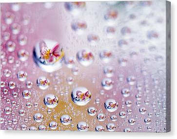 Close Up Of Water Droplets With Flower Canvas Print by Panoramic Images