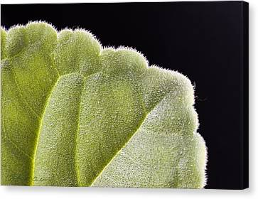 Close-up Texture Canvas Print by Robert Culver