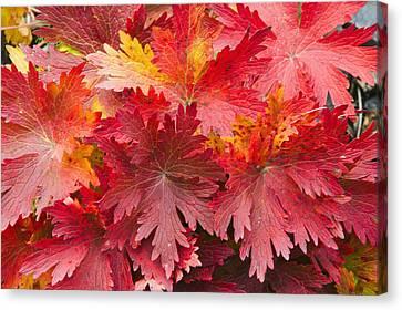 Kodiak Island Canvas Print - Closeup Detail Of Autumn Foliage Kodiak by Kevin Smith