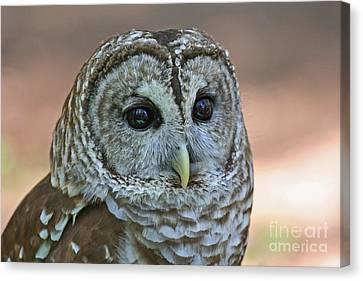 Closeup Of A Barred Owl  Canvas Print