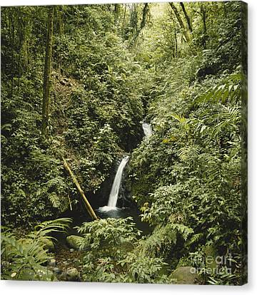 Cloud Forest Waterfall Canvas Print by Gregory G. Dimijian, M.D.