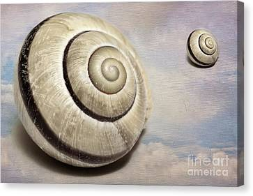 Cloud Shells Canvas Print