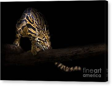 Clouded Existence Canvas Print by Ashley Vincent