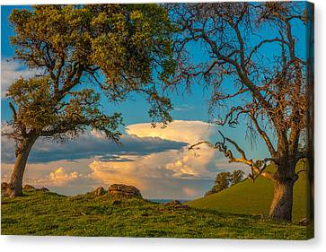 Clouds Between Trees Canvas Print by Marc Crumpler