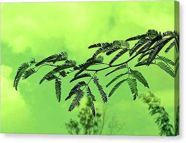 Cloudy Green Nature Canvas Print by Deepti Chahar