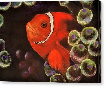 Clown Fish In Hiding  Pastel Canvas Print by Antonia Citrino