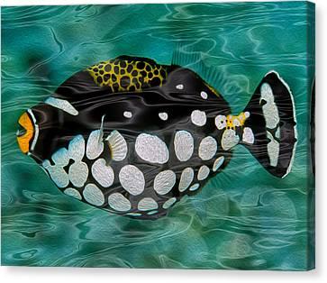 Invertebrate Canvas Print - Clown Triggerfish by Jack Zulli
