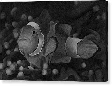 Clownfish Canvas Print by James Wing