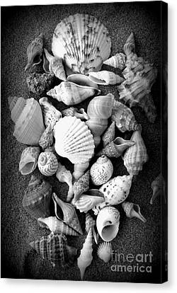 Cluster Of Shells Canvas Print by Diane Reed