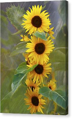 Cluster Of Sunflowers Canvas Print by David Simons