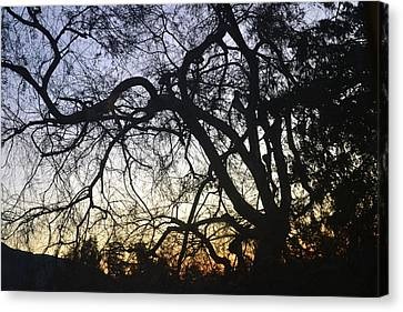 Cluttered Sunrise Canvas Print by Kiros Berhane