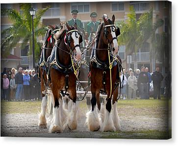 Canvas Print featuring the photograph Clydesdales 4 by Amanda Vouglas