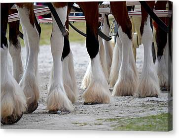 Canvas Print featuring the photograph Clydesdales 5 by Amanda Vouglas